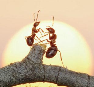 Hz. Süleyman ve Karınca